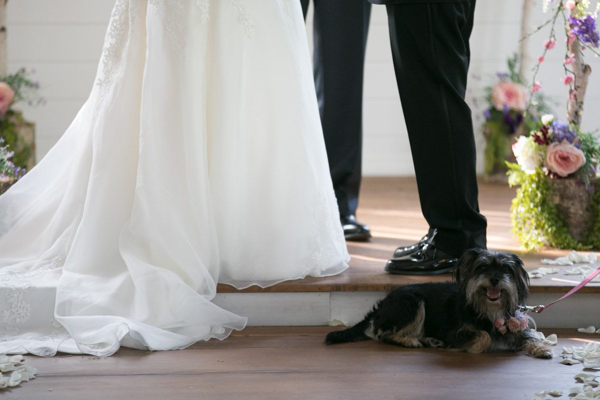 Puppy during ceremony at bride and groom's feet 4_1_16 Rocky and Evelyn Cross Creek Ranch Wedding 053